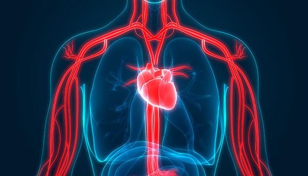 Herz Lungengesundheit Vorteile des Rudergeräts