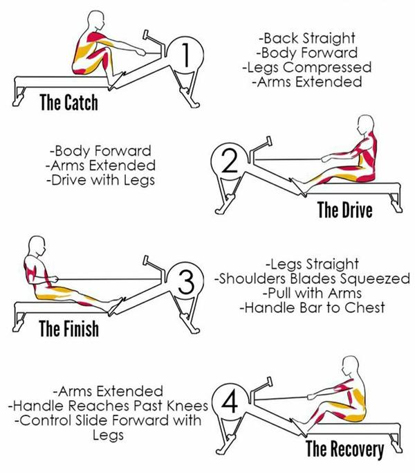 rowing posture