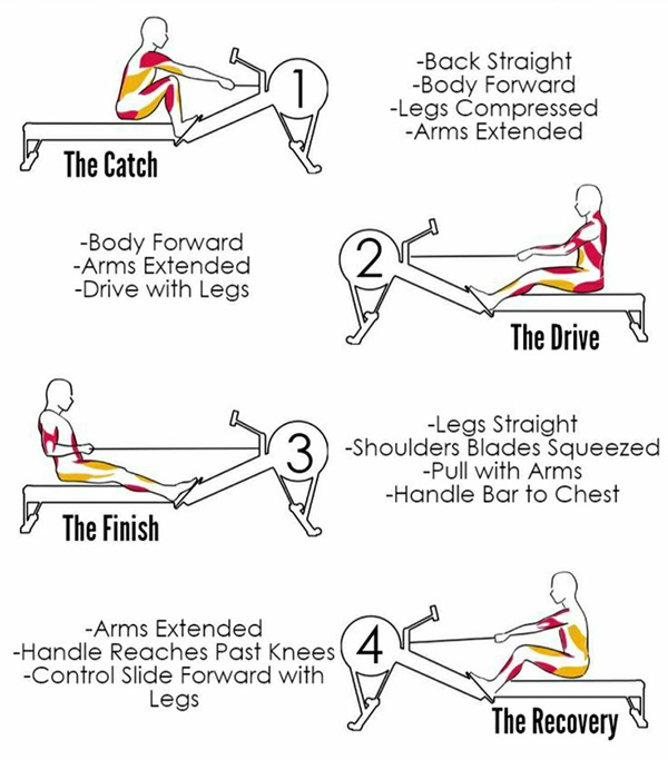 the 4 phases of a rowing stroke