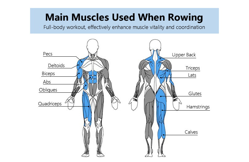 muscles worked indoor rowing benefits of rowing machine